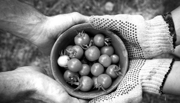 Gedeelde Groentetuinen In De Indische Buurt