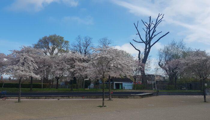 Onderhoud Aan Spartelvijver Westerpark