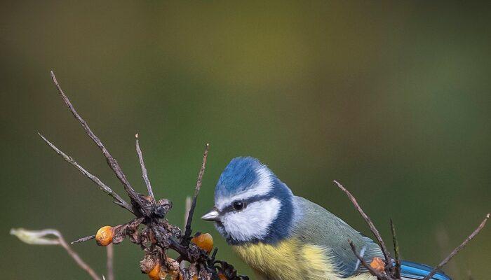 Winnaar Fotowedstrijd Vogelhospitaal Bekend!