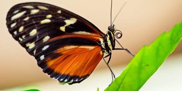 De Vlindertuin Moet Een Leuke Plek Worden Bij Het Buikslotermeerplein
