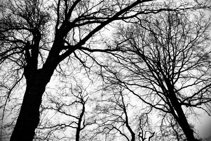Woonproject Nieuw Boerhaave Wordt 96 Bomen Fataal...