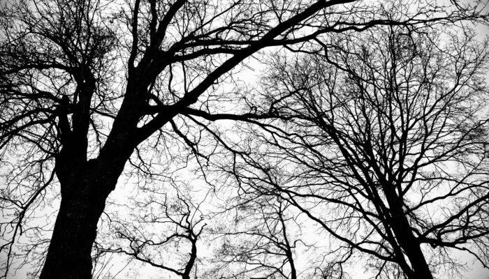 Nieuw Boerhaave Wordt 96 Bomen Fataal