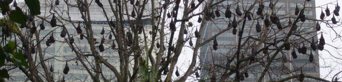 Er Leven 40.000 Vleermuizen In Amsterdam.