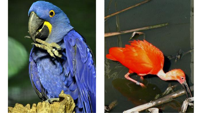 Wie Helpt De Vogels Aan Een Nieuw Onderkomen?