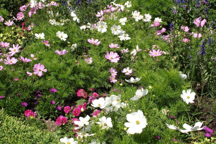 Bloemen In De Buurttuin
